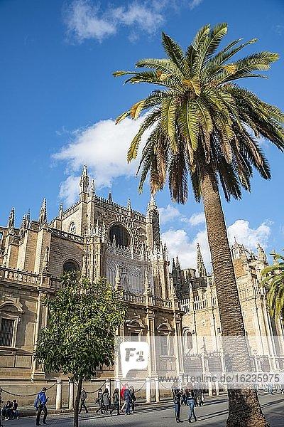 Kathedrale von Sevilla  Catedral de Santa Maria de la Sede  Plaza del Triunfo mit Palme  Sevilla  Andalusien  Spanien  Europa