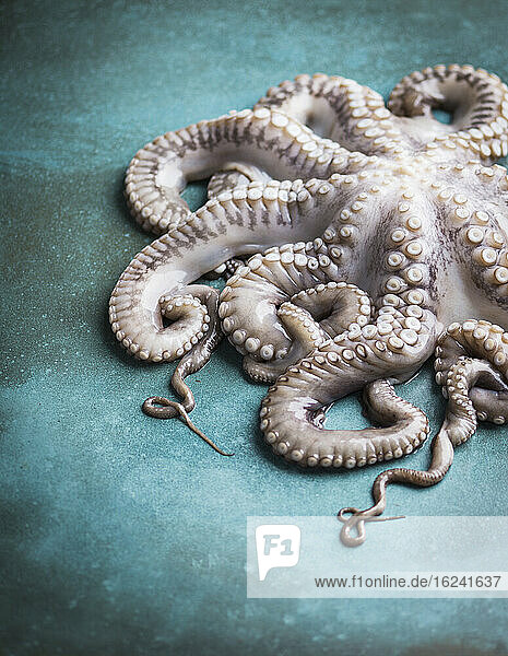 Roher Oktopus