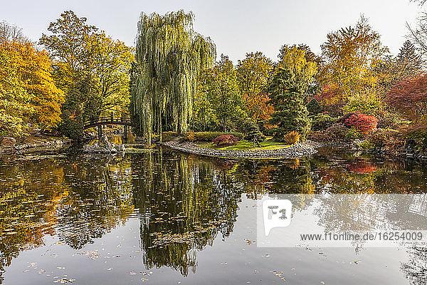 Autumn colours in the Japanese Garden  Szczytnicki Park; Wroclaw  Silesia  Poland