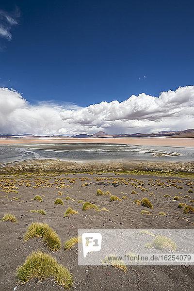 Flamingos on Laguna Colorada  Eduardo Avaroa National Park; Potosi Department  Bolivia