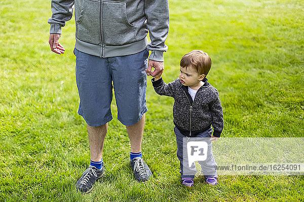 Ein Vater steht mit seiner kleinen Tochter im Gras und hält Händchen; North Vancouver  Britisch-Kolumbien  Kanada