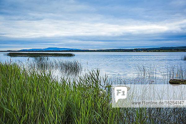 Grünes Schilf am Ufer des Lough Derg an einem bewölkten Tag im Sommer; Grafschaft Clare  Irland