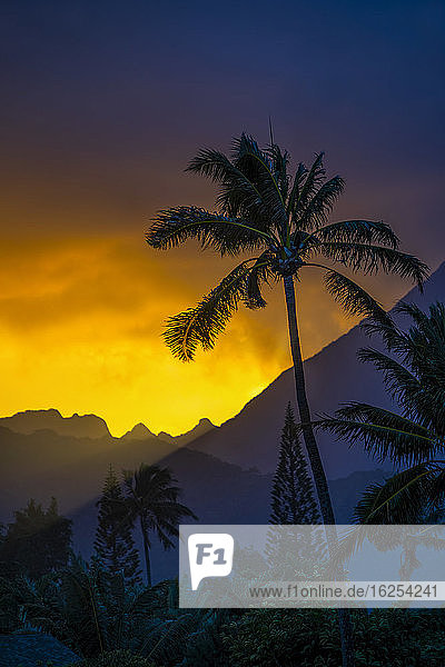 Silhouetted palm tree and peaks of mountains at sunset  Ka'elepulu Canal; Oahu  Hawaii  United States of America