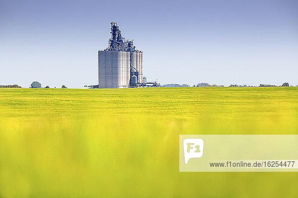 Verschwommenes Rapsfeld vor einem automatisierten Getreideterminal mit Lagersilos für die Verladung von Getreide auf Güterzüge für den Export; Alberta  Kanada
