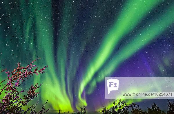 Leuchtendes Polarlicht tanzt über dem Taylor Highway mit herbstlich gefärbtem Laub  Inneres Alaska im Herbst; Alaska  Vereinigte Staaten von Amerika