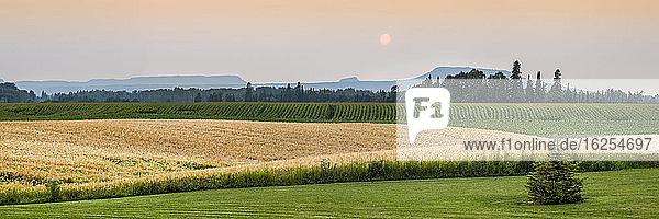 Grüne und goldene Farmfelder bei Sonnenuntergang mit silhouettierten Bergen in der Ferne; Thunder Bay  Ontario  Kanada
