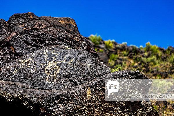 Petroglyphen auf Vulkangestein mit Salbeibusch im Piedras-Marcadas-Canyon  Petroglyphen-Nationaldenkmal an einem sonnigen Frühlingsnachmittag; Albuquerque  New Mexico  Vereinigte Staaten von Amerika