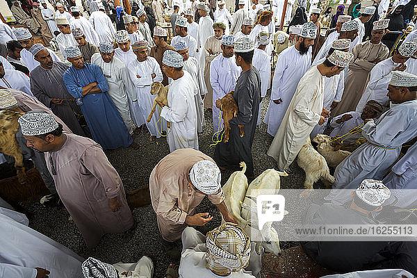 Traditionell gekleidete omanische Männer inspizieren Ziegen auf dem Ziegenmarkt im Friday Souk