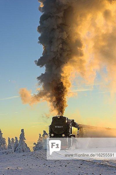Brockenbahn fährt durch verschneite Fichten (Picea) auf den Brocken im Abendlicht,  Harz,  Schierke,  Sachsen-Anhalt,  Deutschland,  Europa