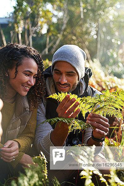 Glückliches junges Wanderpaar untersucht Farnblätter