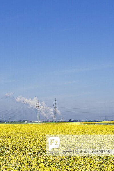 Germany  North Rhine-Westphalia  Pulheim  view to rape fields (Brassica napus) in front of overland high voltage power lines and emission of lignite power plant