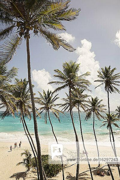 Caribbean  Antilles  Lesser Antilles  Barbados  Bottom Bay  beach