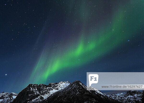 Norway  Lofoten  Polar lights (aurora borealis) on Gimsoy