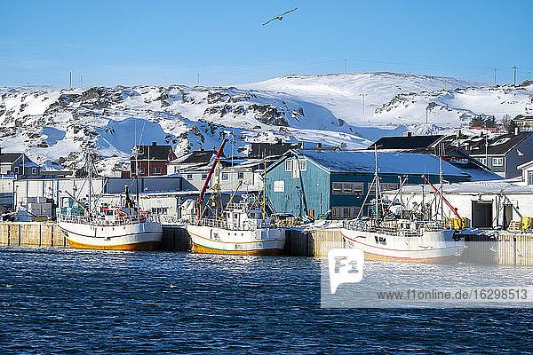 Fischerboote im Hafen  Berlevag  Varanger-Halbinsel  Finnmark  Norwegen