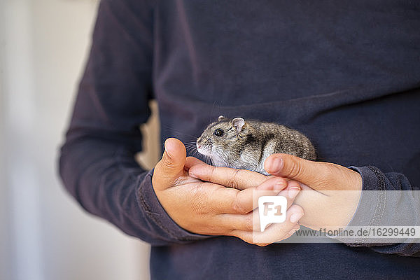 Midsection of girl holding cute hamster