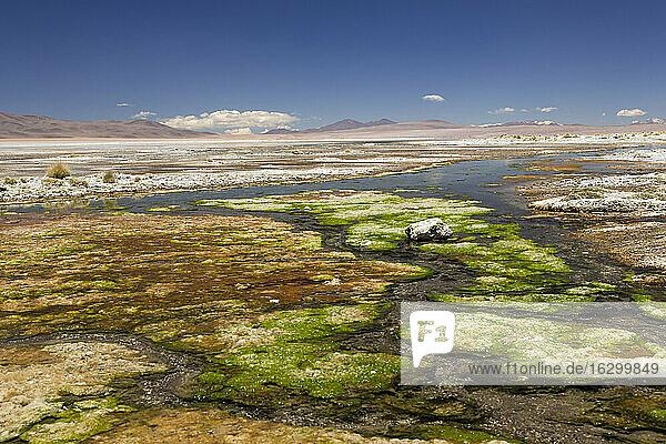 Bolivia  Atacama Desert  Salar de Chalviri