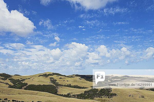 New Zealand  Northland  Cape Reinga area  Farmland  Te Paki Sand Dune in the background on right