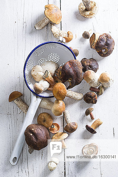 Different wild mushrooms on wooden table