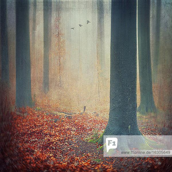 Herbstwald mit rotem Laub auf dem Boden  digitale Bearbeitung