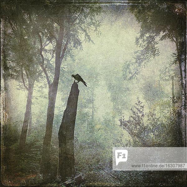 Vogel sitzt auf Totholz im Wald  Entfremdung