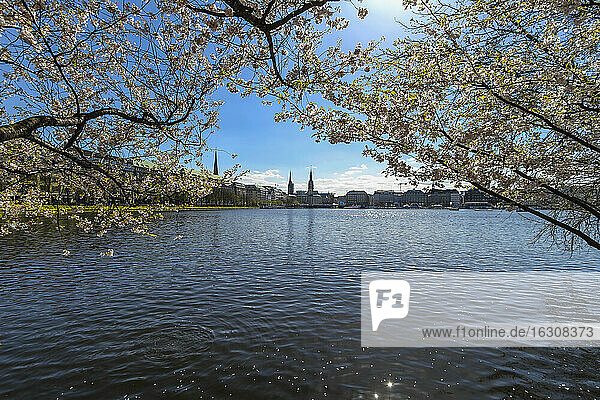 Germany  Hamburg  Inner Alster in spring