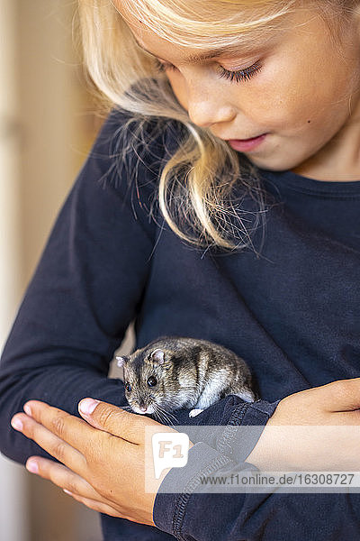 Cute little girl handling hamster with care
