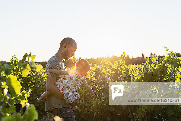 Father and daughter in the vineyards Father and daughter in the vineyards