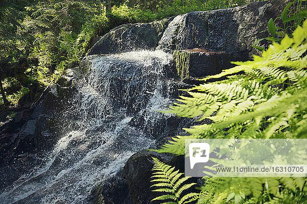 Sweden  Oernskoeldsvik  Skuleskogen National Park  Little waterfall