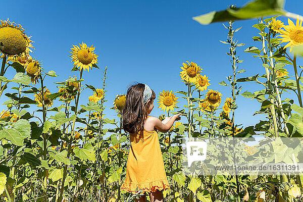 Girl admiring sunflower in field against clear blue sky
