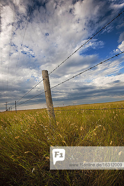 USA  South Dakota  Barbed wire fence and prairie grass in field
