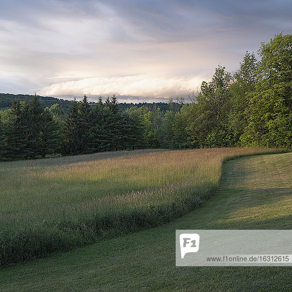 USA  New York  Cooperstown  Sunset over meadow and forest