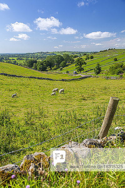 View of dry stone walls and countryside near Brassington  Derbyshire Dales  Derbyshire  England  United Kingdom  Europe