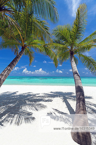 Tropical beach and palm trees  The Maldives  Indian Ocean  Asia