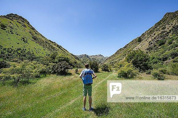 Wanderer auf Wanderweg in einem Tal  Grandview Mountain Track  Lake H?wea  Südalpen  Otago  Südinsel  Neuseeland  Ozeanien