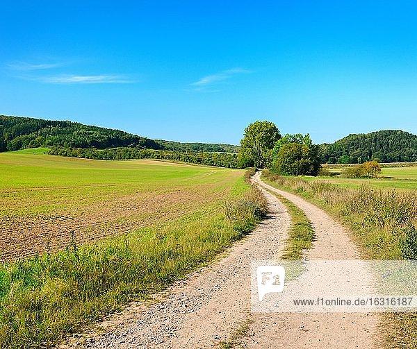 Feldweg windet sich durch Kulturlandschaft im Herbst  Felder mit Wintersaat  hinten mit Wald bedeckte Hügel  blauer Himmel  Saalekreis  Sachsen-Anhalt  Deutschland  Europa