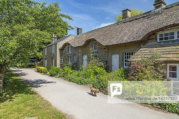View of thatched cottages in Baslow  Derbyshire Dales  Derbyshire  England  United Kingdom  Europe