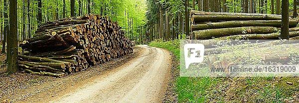 Holzstapel am Waldweg im Frühling  Eichsfeld  Thüringen  Deutschland  Europa