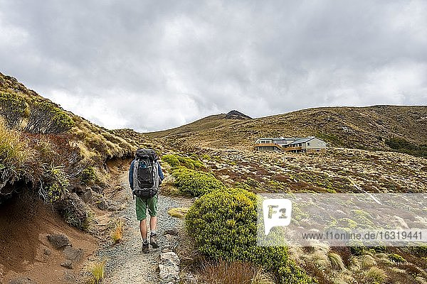 Hiker on Kepler Track  Luxmore Hat  Fiordland National Park  Southland  South Island  New Zealand  Oceania