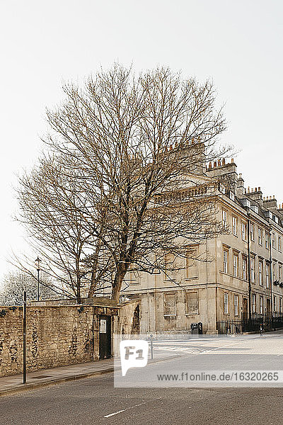 Bare tree and buildings along sunny empty street  Bath  Somerset  UK