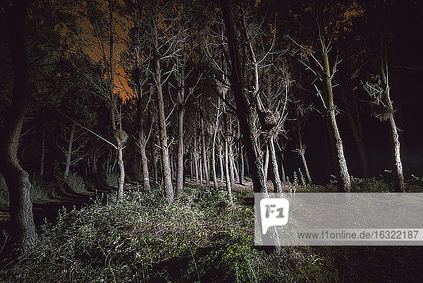Forest at night illuminated with a flashlight