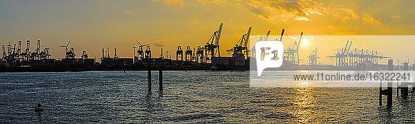 Germany  Hamburg  harbour cranes at Elbe river at sunset  Panorama