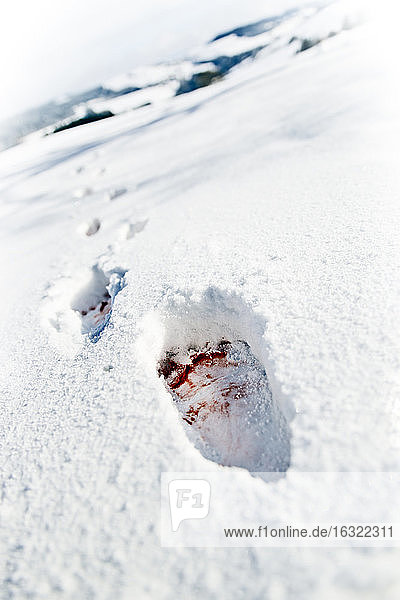 Blood-stained footprints in snow