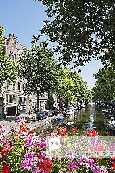 Netherlands  County of Holland  Amsterdam  Egelantier's Canal  flowering geranium