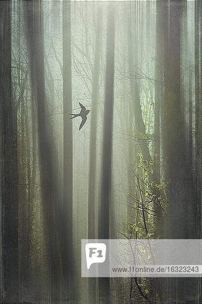 Fliegender Vogel  Wald  digital manipuliert