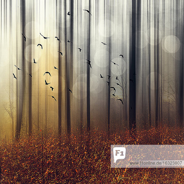 Flock of birds in autumn forest  digitally manipulated