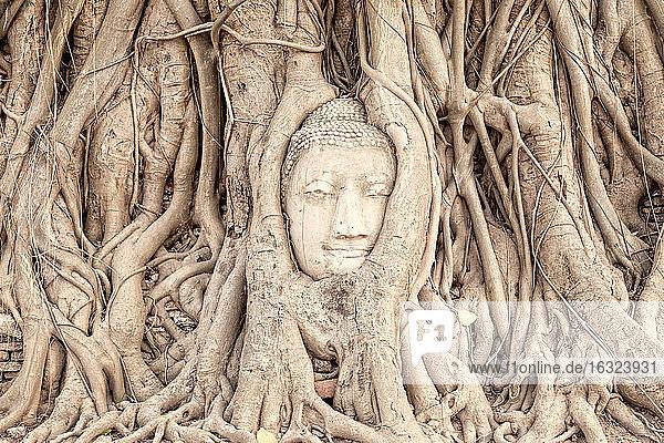 Thailand  Ayutthaya  Buddha-Kopf zwischen Baumwurzeln im Wat Mahathat