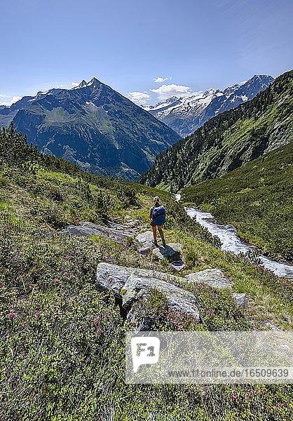 Wanderin auf Wanderweg am Kesselbach  Berliner Höhenweg  links Großer Greiner  rechts Kleiner Hochsteller  Kälberlahnerspitze und Hochsteller  Zillertaler Alpen  Zillertal  Tirol  Österreich  Europa