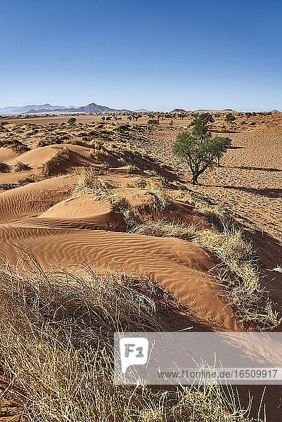NamibRand-Naturreservat  Namibia  Südafrika  Afrika