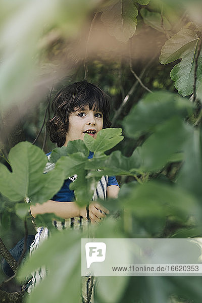 Cute boy standing while hiding behind leaf of tree in garden