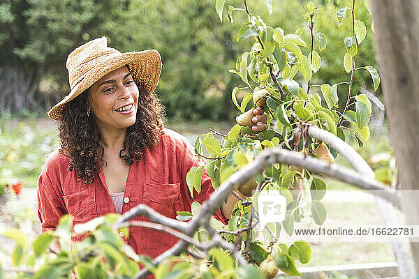 Smiling woman looking at fresh pears at vegetable garden